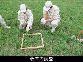 牧草の調査
