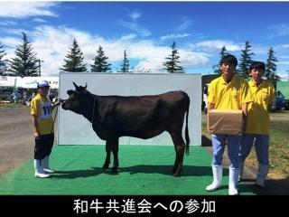和牛共進会への参加