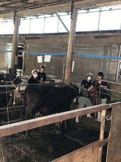 牛の管理実習